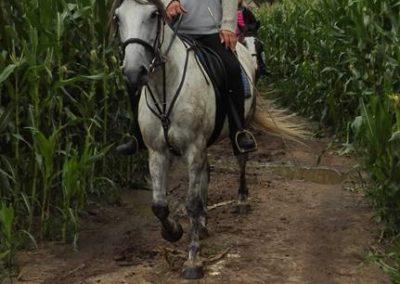 konie-22