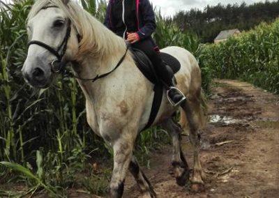 konie-30