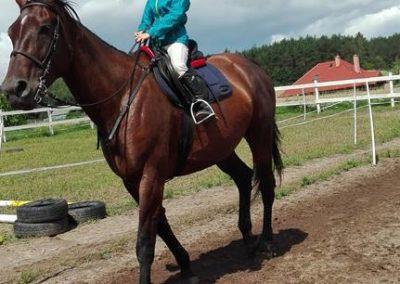 konie-31